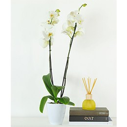 Orchids: Nature Lovers